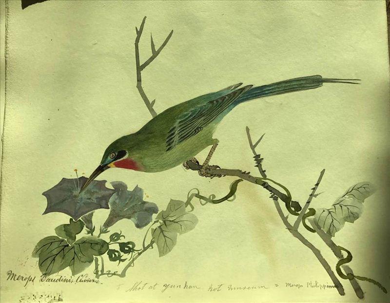 手绘鸟类标本图(组图2)