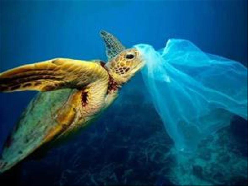 新发现一头搁浅的海洋动物,胃内有30个塑料袋
