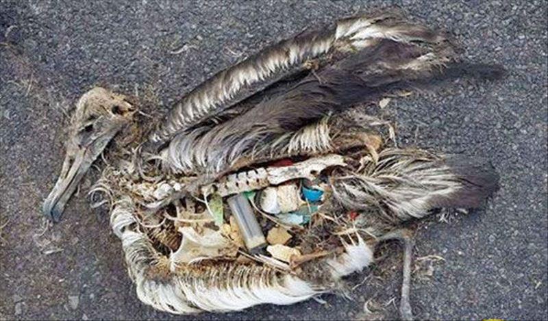 每年有大量海洋动物死于塑料垃圾污染.