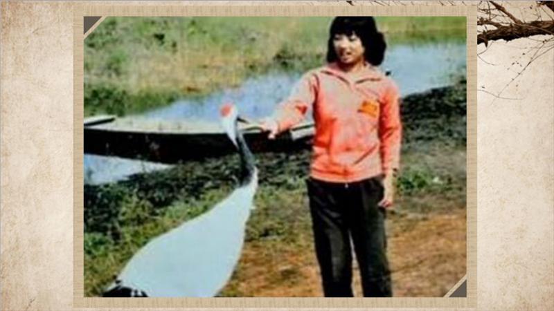 1986年江苏盐城珍禽自然保护区一位年轻的女孩,为寻找失飞的丹顶鹤