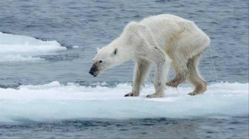 适合寒冷环境的动物