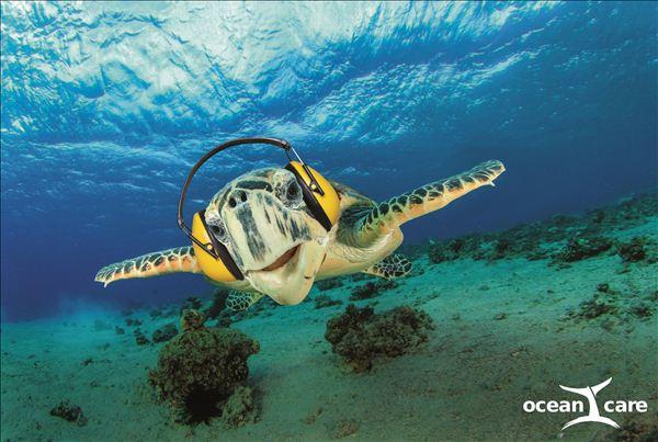 绿会与两领先国际组织就海洋噪音污染问题进行深度沟通