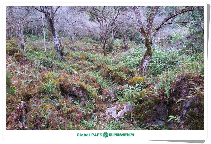 图4:贵州荔波南方喀斯特地貌世界自然遗产地.jpg