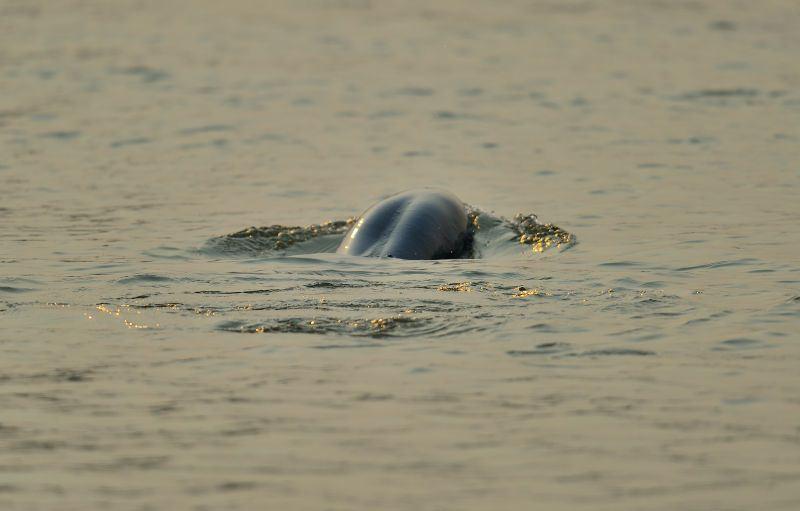 dolphin 1.jpg