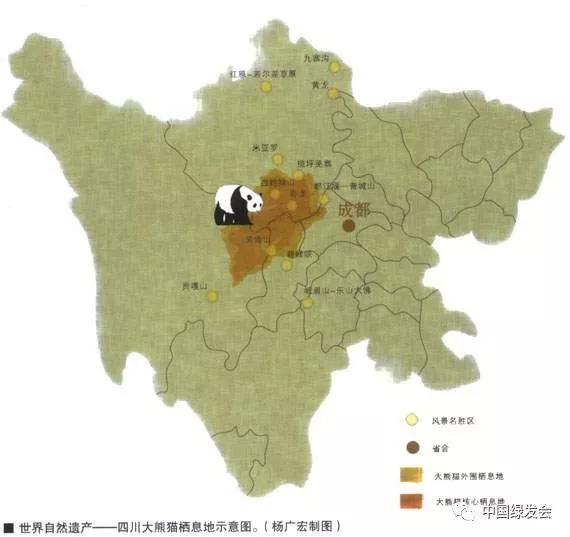 panda epil.jpg