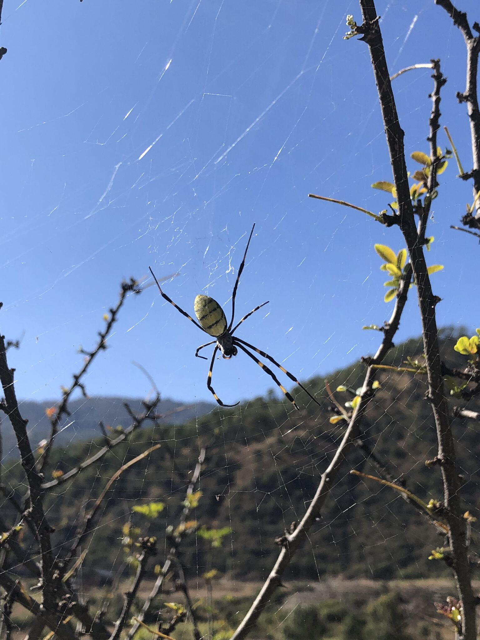 不愧是绿会的志愿者——尽收眼底的当地蜘蛛.jpeg