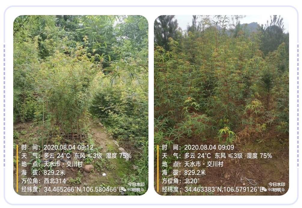 微信图片_20200820171436.jpg