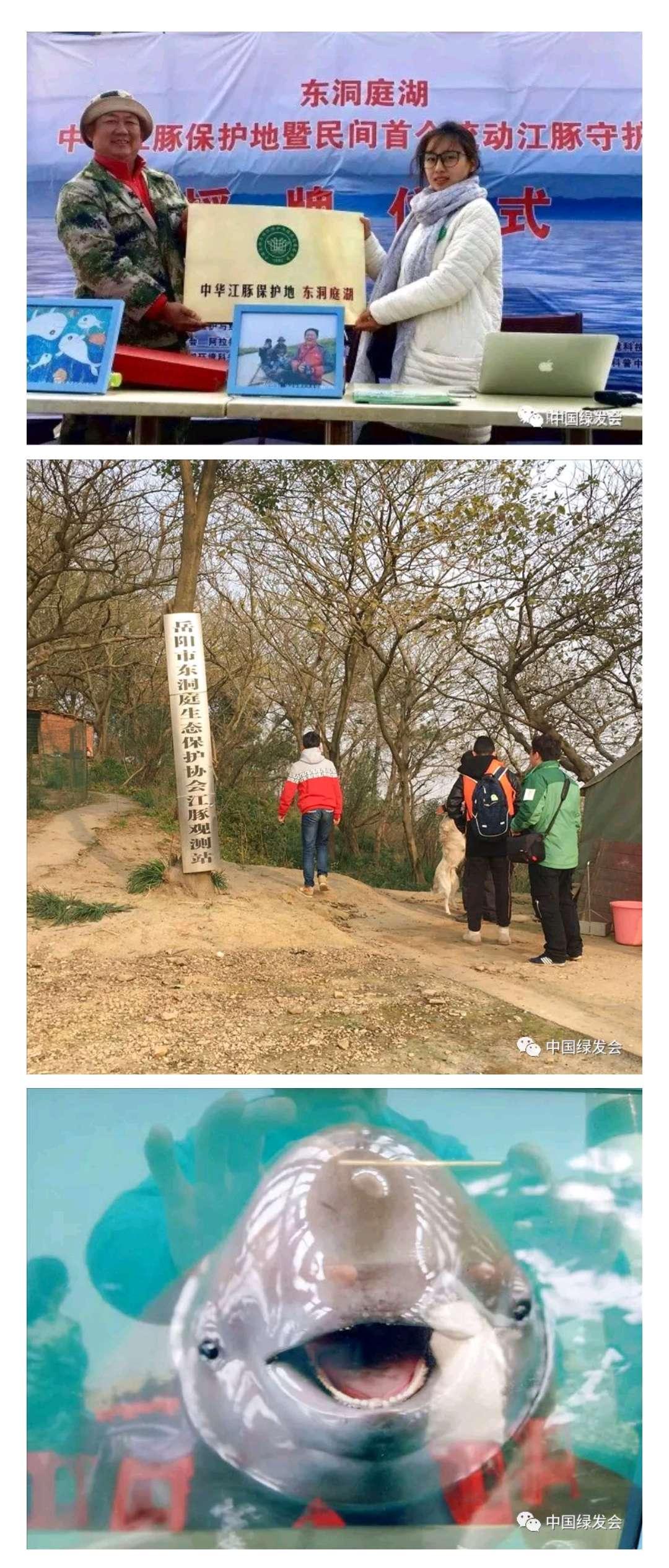 长江江猪图片_候鸟、江豚、秋沙鸭......长江沿岸的绿会保护地,第二波来袭 ...