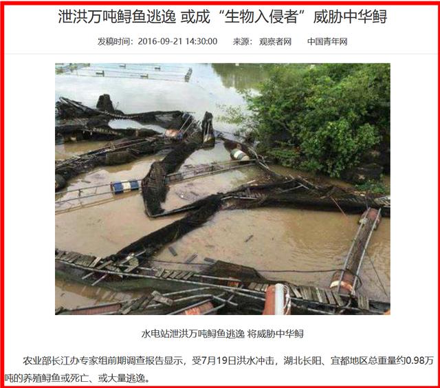 洪水中養殖中華鱘的逃逸危害生物多樣性2.png